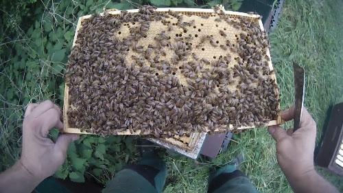 bee bar hive Allen top dick