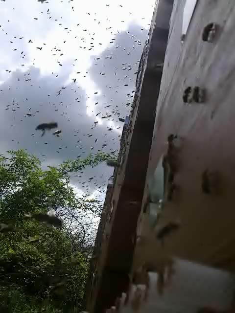 ertragssteigerung durch bienen